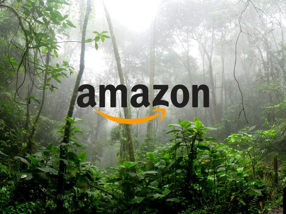 Hilfe aus dem Amazon-Dschungel